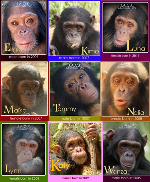 adopt-collage2