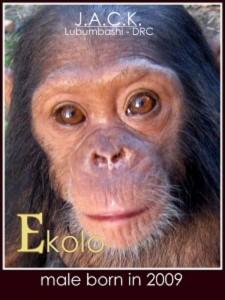 ekolo-225x300