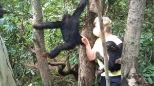 kongo2013-trees500