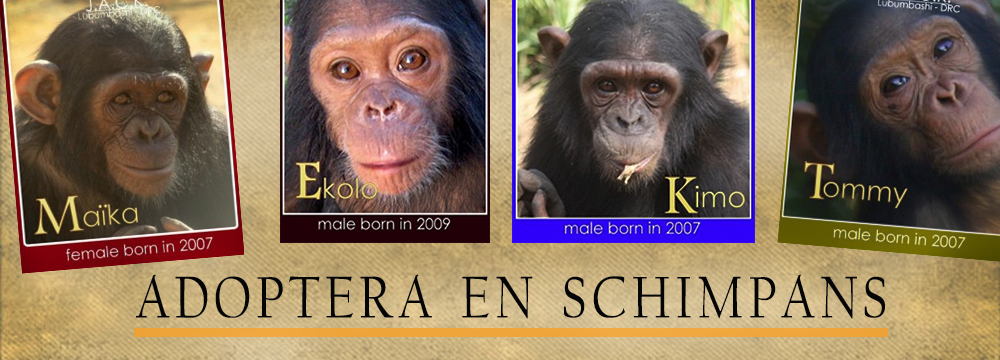 slider-chimp-adopt4